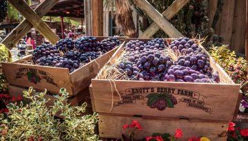 Knott's Berry Farm Ticket Giveaway