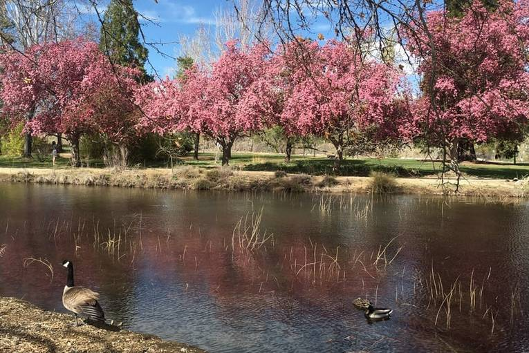 Idlewild Park Reno