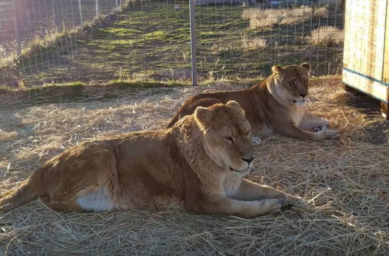 Safe Haven Wildlife Sanctuary Imlay Nevada