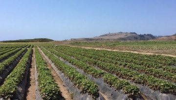 Northern California U-Pick Farms, Orchards & Tours
