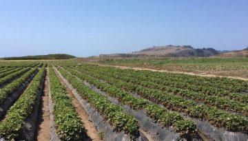Northern California U-Pick Farms
