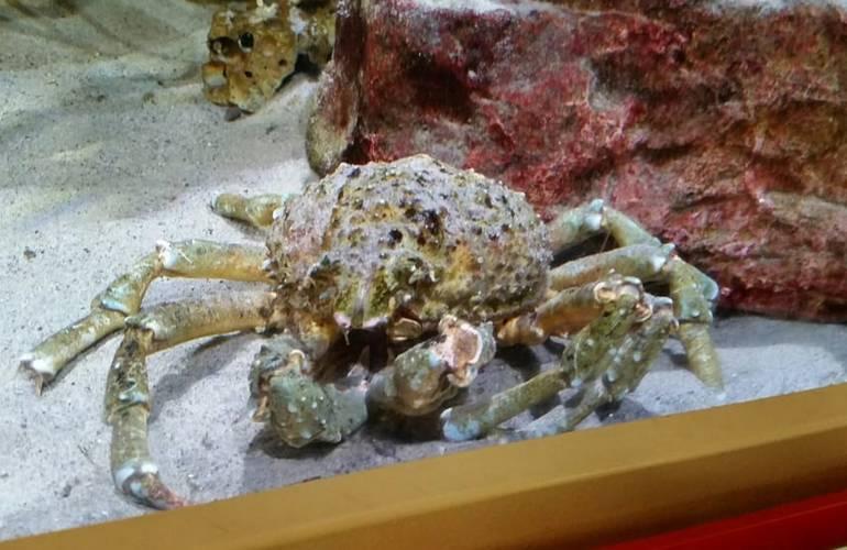 Santa Monica Pier Aquarium Day Trip Nearby Attractions