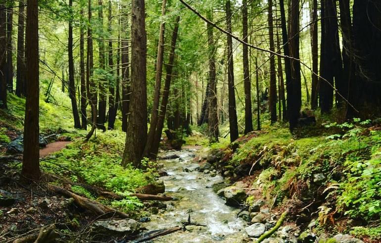 Limekiln State Park Big Sur California