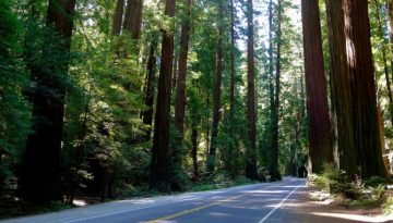 Avenue of the Giants Humboldt Redwoods