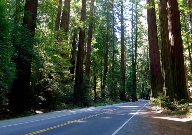 Avenue of the Giants Humboldt Redwoods