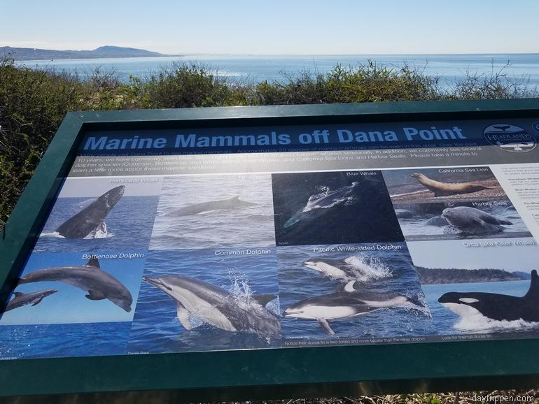 Dana Point Headlands Nature Preserve Whale Watching