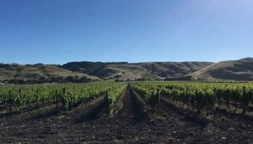 Sonoma Valley Day Trip Things To Do