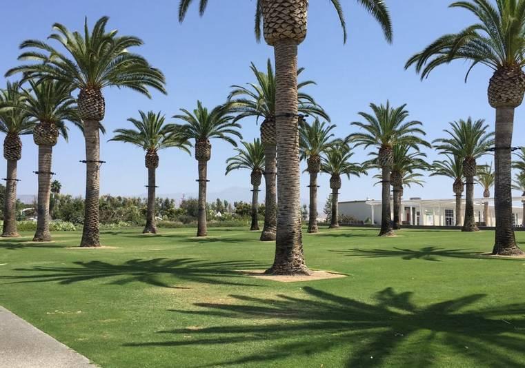 Great Park Irvine Palm Court Arts Complex