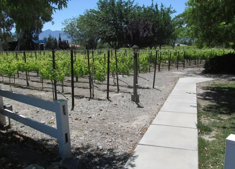 Pahrump Valley Winery Vineyard