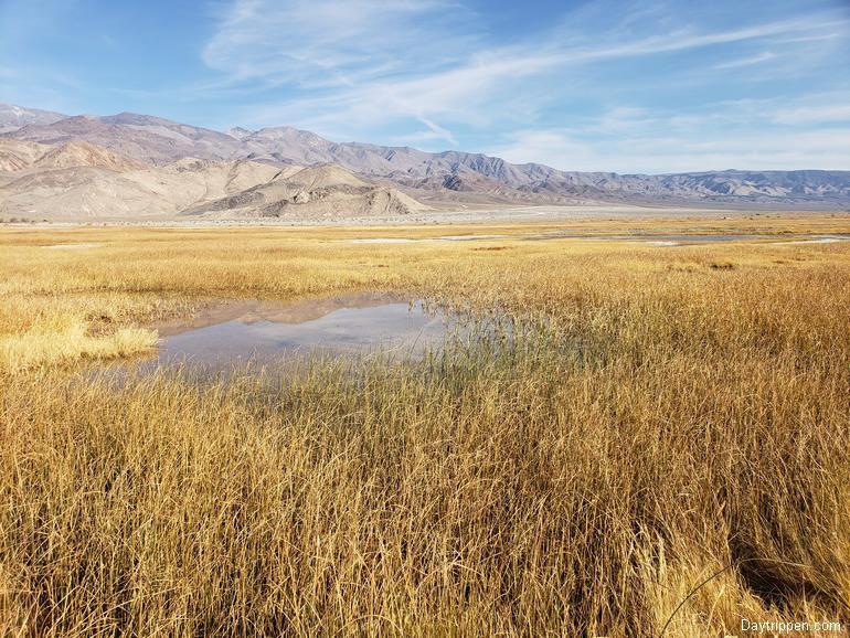 Owens Lake Marsh Area with Salt Grass