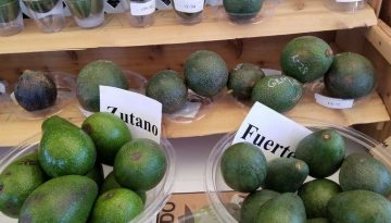 Fallbrook Avocado Festival