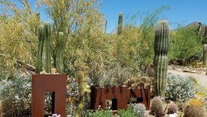 Sonora Desert Museum Arizona