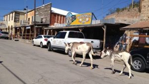 Oatman Ghost Town Day Trip