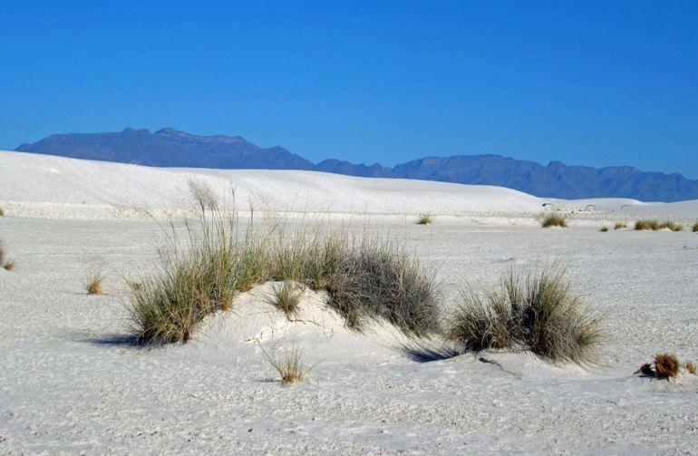 New Mexico Dunes