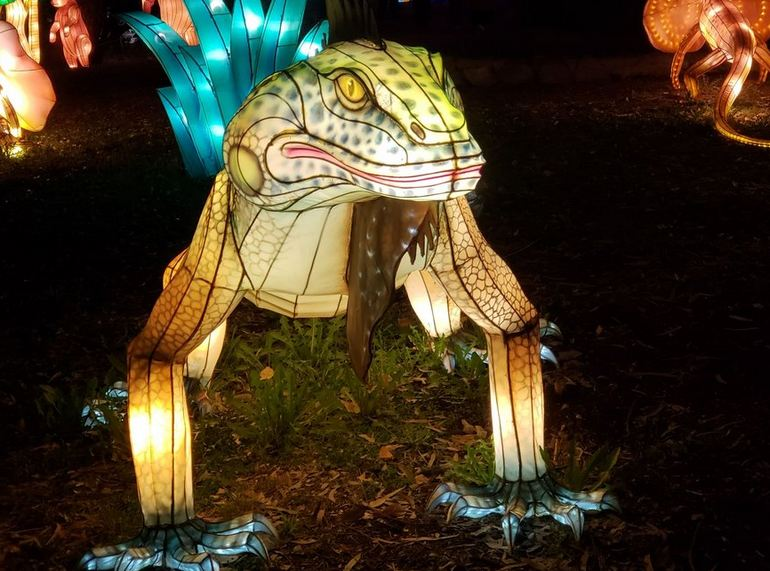 Frog Lantern Display