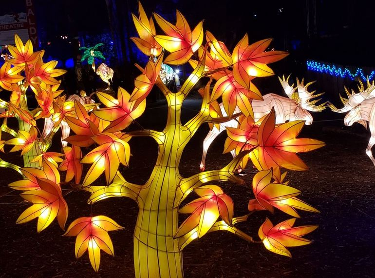Tree Lantern Display