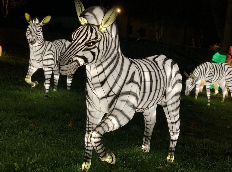 Zebra Lantern Display