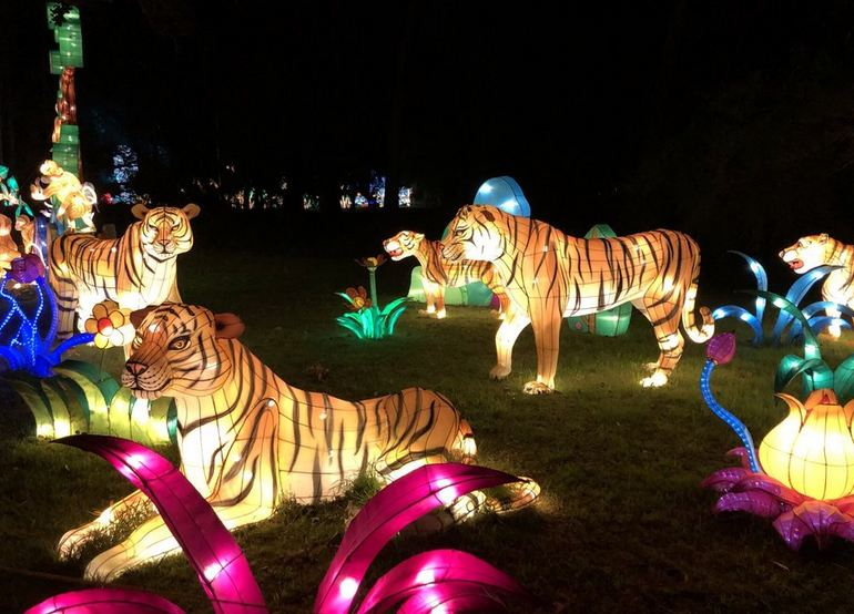 Tiger Forest Lanterns