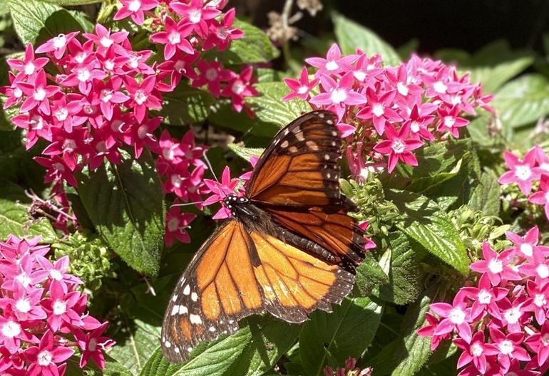 Butterfly Farm Ecnintas California